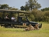 Game drive at Elephant Pepper Camp, Kenya