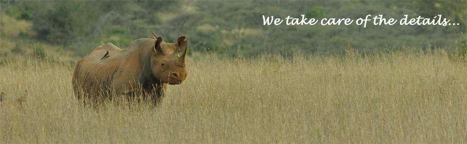 Rhino by Mike
