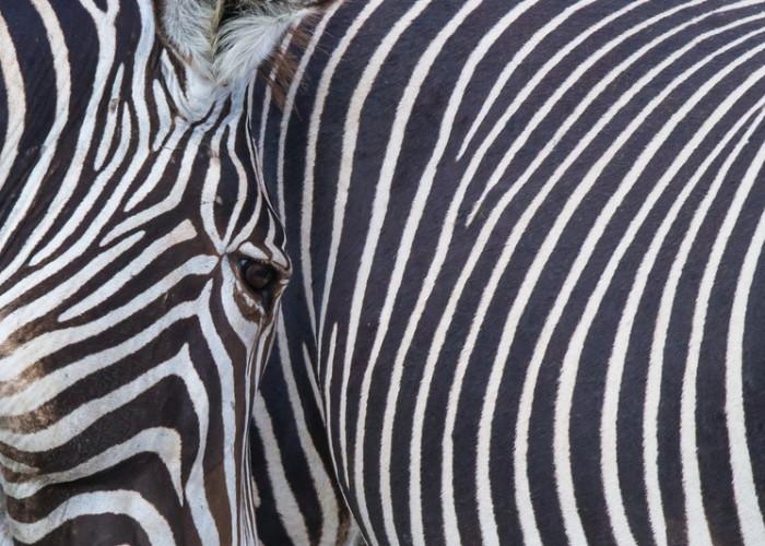 Equatorial diversity, Congo & Kenya