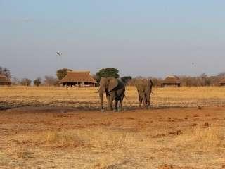 Camp Hwange elephants