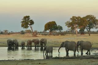 Incredible elephant viewing at Somalisa Camp