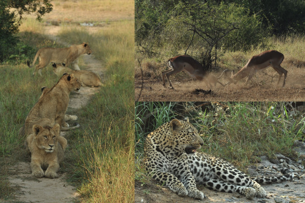 The wonders encountered on safari
