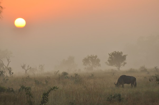 Sunrise on Sabi Sand – it's the dust and the light