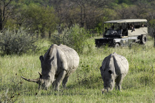 Rhinos on Ongava Private Game Reserve